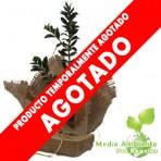 Arbusto Publicitario en Arpillera
